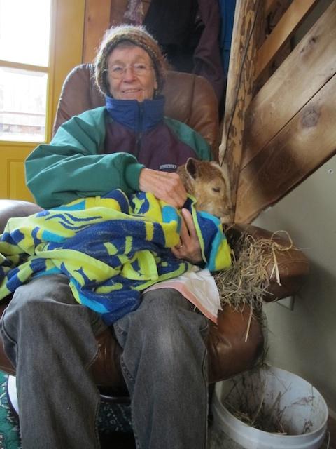 Goat nursing