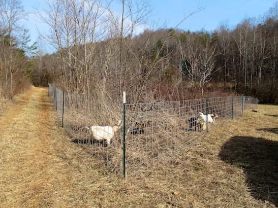 New pasture!