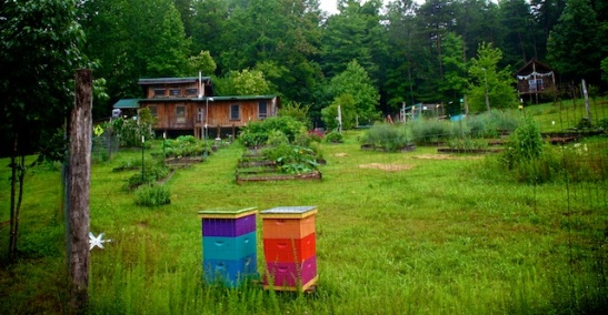 Garden and colorful bee boxes
